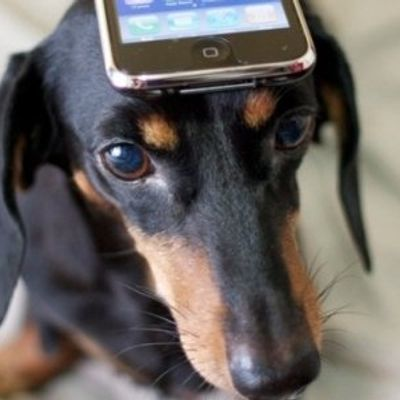 7 Must Have Apps for Dog Owners ...