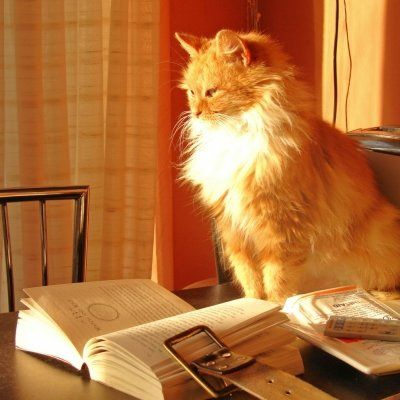 7 Amazing Books about Cats ...