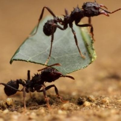 9 Natural Ways to Get Rid of Ants in Your Home ...