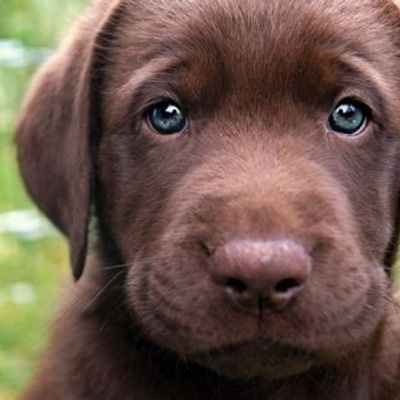 7 Pup-Friendly Foods That Can Make Them Healthier and Happier ...