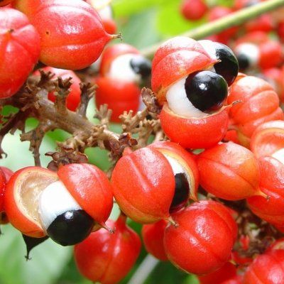 7 Exotic Fruits from the Amazon to Try ...