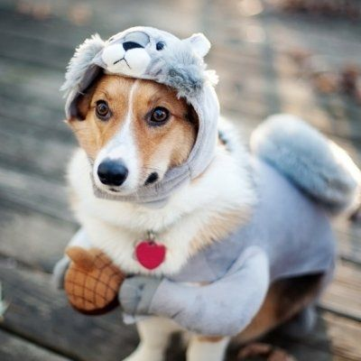 41 of the Most Hilarious Dog Costumes You'll Ever See ...