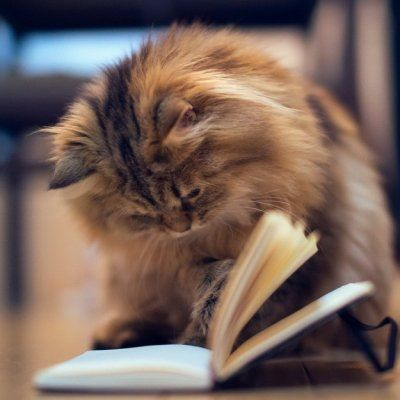 7 Struggles of Being a Bookworm ...