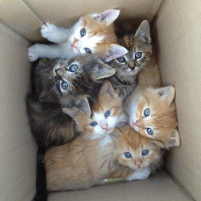 8 Signs You Might Be a Crazy Cat Lady ...