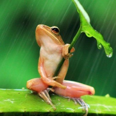 13 Photos of Frogs That Perfectly Describe Your Teen Years ...