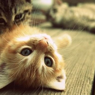 7 Crazy Things Cats do That You Won't Believe ...