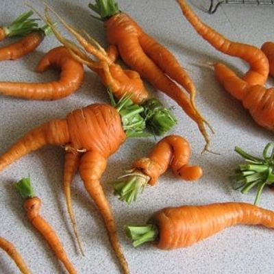 5 Tips on Growing Carrots ...