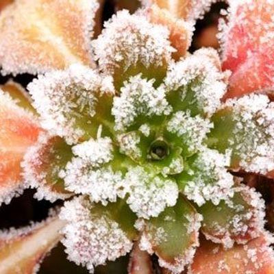 7 Ways to Enjoy Your Garden in Winter ...