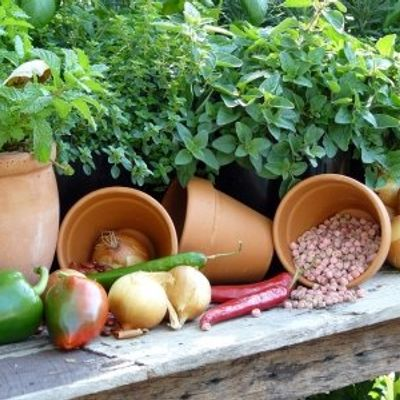 7 Brilliant Reasons to Grow Your Own Food ...