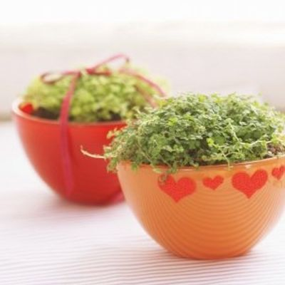 7 Herbs That Are Easy to Grow Indoors ...