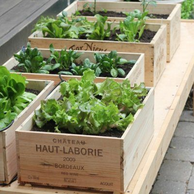 24 Things to Grow in Your Garden Even if You Have 0 Green Thumb Genes ...