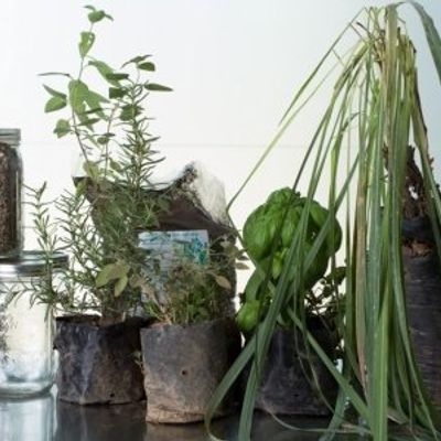 7 Creative Ways to Reuse Containers for Plants and Herbs ...