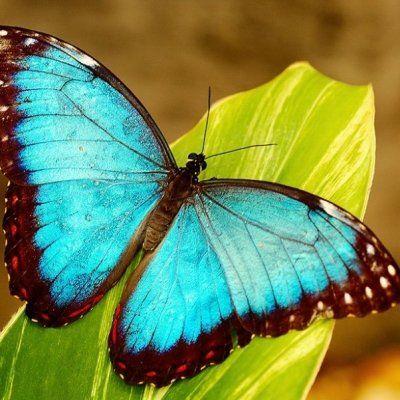 7 Beautiful Butterflies to Spot in Your Garden Today ...