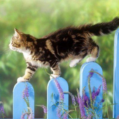 7 Ways to Create a Cat Friendly Garden ...