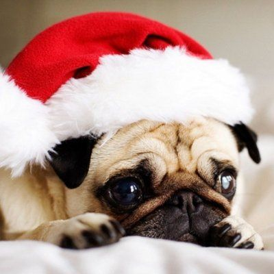 7 Ways to Cope with Being Alone at Christmas ...