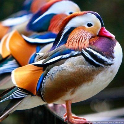 35 Beautiful Birds to Make Your Day Brighter ...