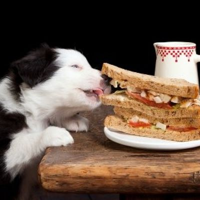 7 Ways Cooking for Your Dogs Can Benefit Their Health ...