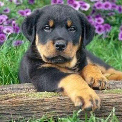 7 Great Pet Names Based on Greek Mythology ...