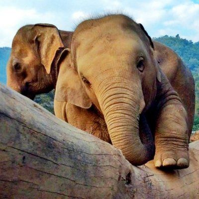 35 Things to Show off Your Love of Elephants ...