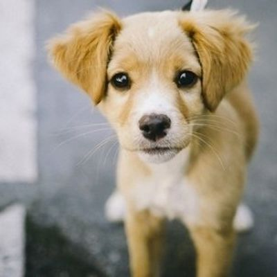 7 Valid Reasons Why You're Not Ready for a Dog ...