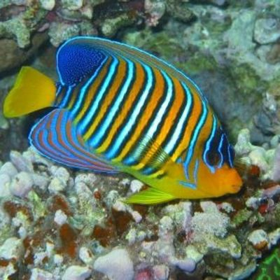 7 Cool Tropical Fish to Add to Your Tank ...