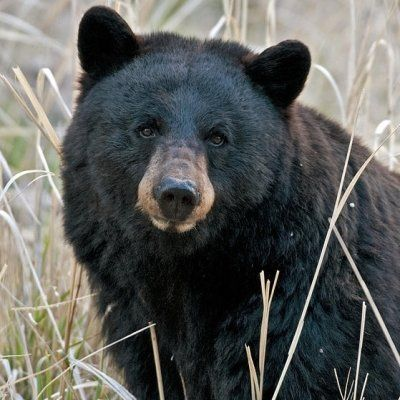7 Magnificent Animals in Yellowstone National Park ...
