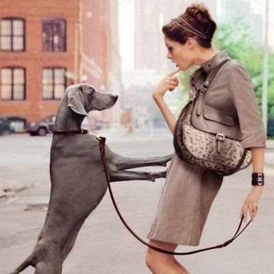 7 Calming Signals in Dogs' Body Language You Should Know about ...