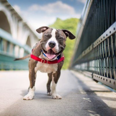 7 Travel Tips for Backpacking with Your Dog ...