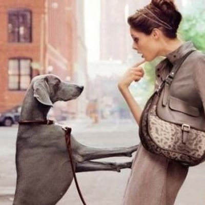 7 Tips when Bringing Another Dog Home ...