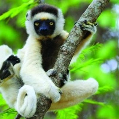 7 Ways Science Has Found to Help Endangered Animals ...