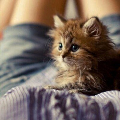 7 Tips on Taking in a Stray Cat ...