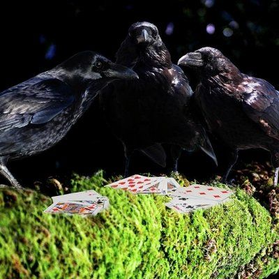 7 Interesting Facts about Ravens You Might Not Know about ...