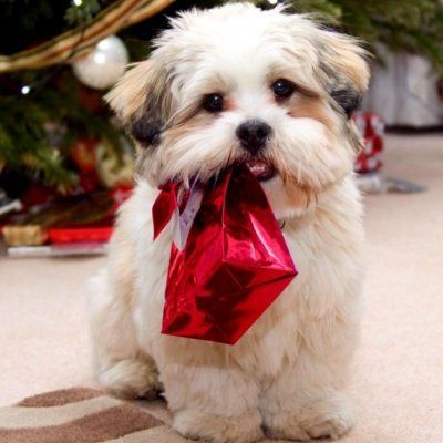 Merry Doggone Christmas: Perfect Presents for Your Pup ...