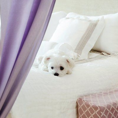 7 Tips for Pet Proofing Your Home ...