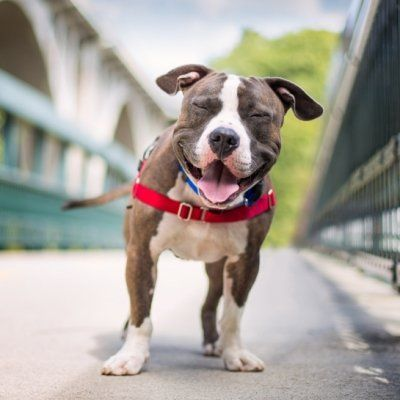 7 Ways to Keep Your Pets Happy and Healthy This Summer ...