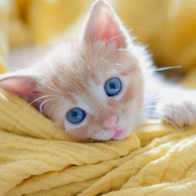 7 Ways to Keep Your Pets Safe at Home ...