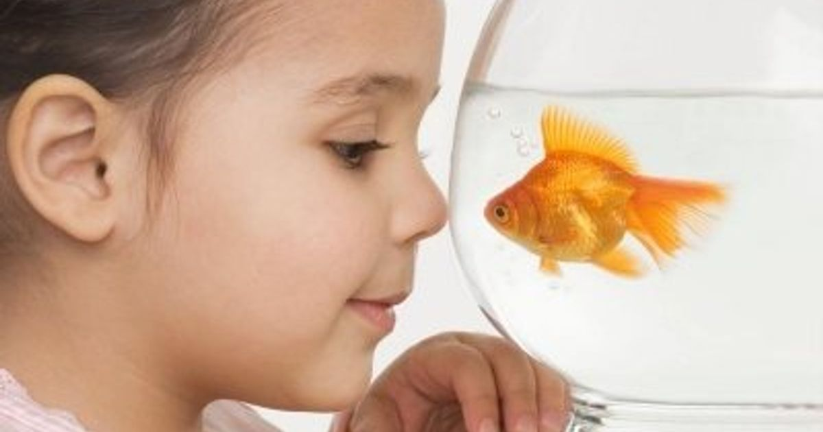7 Reasons To Get A Fish Tank For Your Kids
