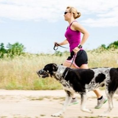 7 Tips for Running with Your Dog ...