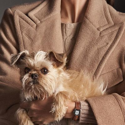 15 Best Small Dog Breeds for Indoor Pets ...