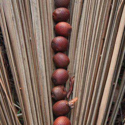 How Does Buriti Oil Help Your Skin?