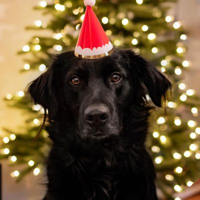 10 Adorable  Pets  Dressed to Impress  This Christmas  ...