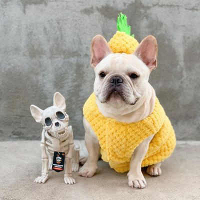 7 Pro ✅ Tips for Keeping Pets 🐶🐱 Safe 🙏 at Halloween 👻 ...