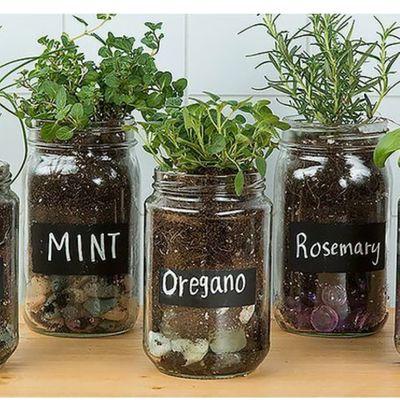 Ways to Display Your Jar Herb Gardens ...