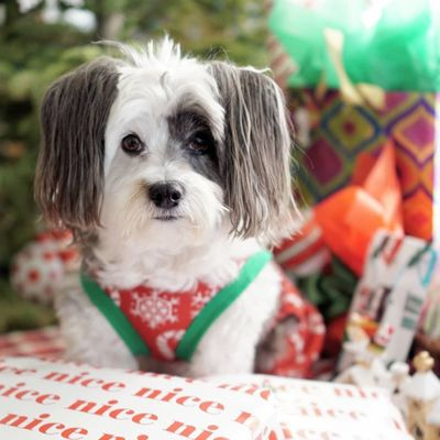 Top Tips for Keeping Your Pets Safe at Christmas ...