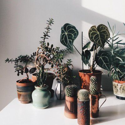 Undemanding Houseplants 🎍for Busy Girls ⏰ Who Still Want Foliage 🌵 ...