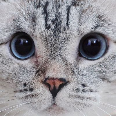 7 Convincing Reasons to Not Declaw Your Cat ...