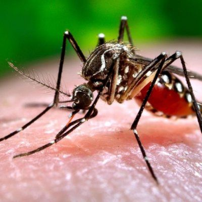 Facts about Zika Virus All Health Obsessed People Should Read ...