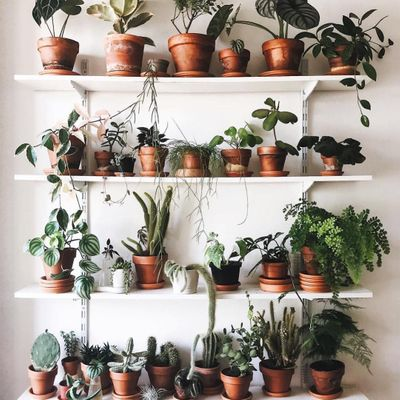 5 Lively 😁 Ideas 💡 for Decorating 🎨 with Plants 🌱 ...