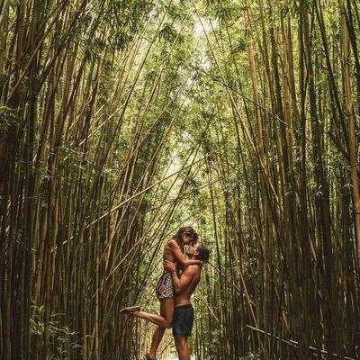 5 Tips on Growing Bamboo …
