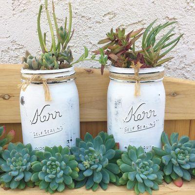 DIY Mason Jar Succulents ...